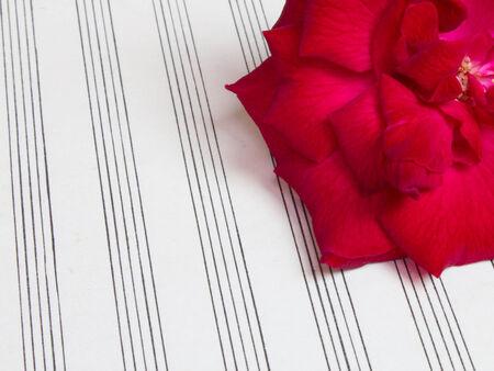 blank sheet: rosa roja en la m�sica hoja en blanco