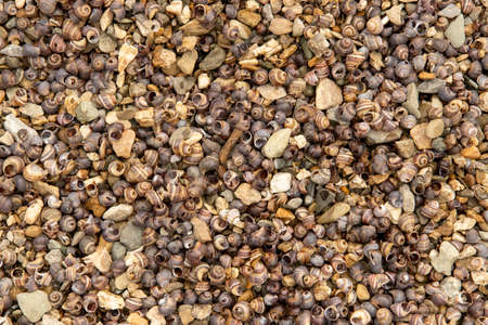 Many small seashells on the riverbank, texture in good quality