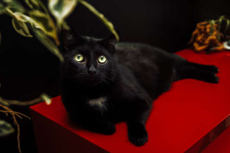 A black domestic cat lies on a red curbstone under a ficus