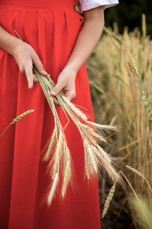 Girl in a red dress holding spikelets in her hands 免版税图像