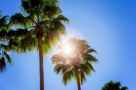 Sun shining through palm trees, blue sky. Stock Photo