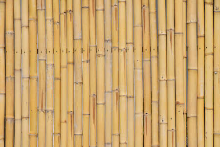 gaps: Background of yellow natural bamboo vertical trunk bodies with gaps between