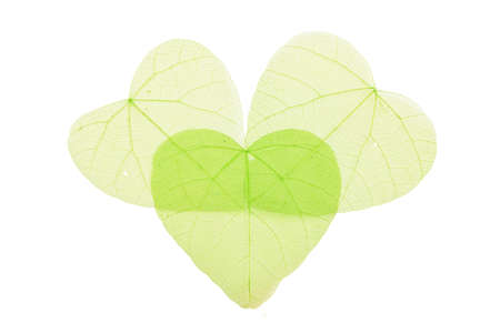 overlap: Group of three green heart shaped dried skeleton leaves decoration with overlap isolated on white background Stock Photo