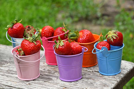 mellow: Several small colorful multicolored metal toy buckets full of red mellow strawberries on old vintage wooden table over green grass, close up Stock Photo