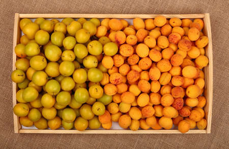 mellow: Wooden tray full of fresh mellow yellow plums (cherry plums) and ripe apricots on burlap canvas background top view Stock Photo