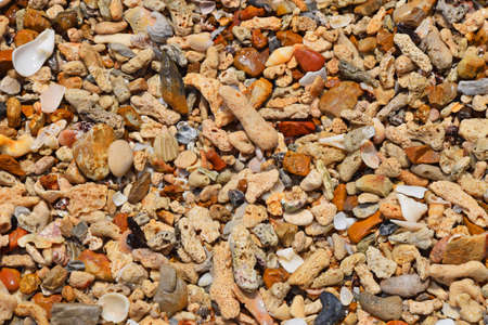 shards: Colorful assorted shells, pebbles, shards, stones, corals and other small sea things and pieces on shore in water under sunshine, close up texture pattern background, top view