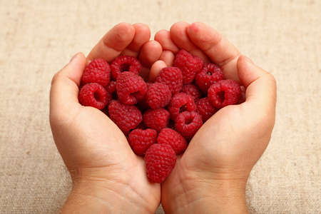 personal perspective: Two man hands with heart shaped palms holding handful of red ripe raspberries over canvas, close up, high angle view, personal perspective