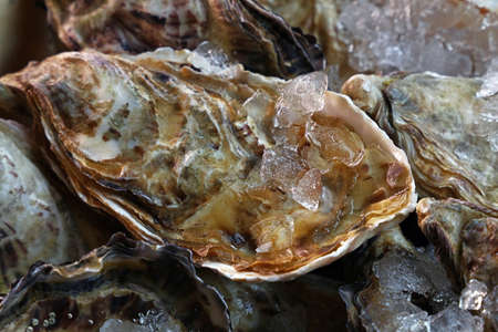 unopen: Fresh big raw oysters unopen in shells on crushed ice, close up