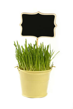 Fresh spring green grass growing in small painted metal bucket with wooden black chalkboard sign, close up over white background, low angle side view
