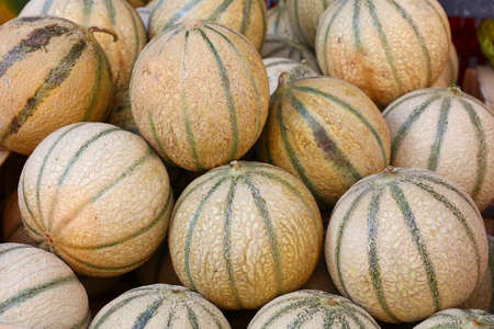 Close up whole fresh ripe summer cantaloupe melons on retail display of farmers market, high angle view Imagens