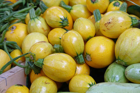 Close up fresh new yellow baby round zucchini on retail display of farmers market, high angle view Stock fotó
