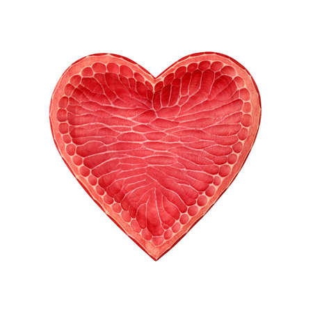 Close up one vivid red painted natural wooden carved heart shaped empty bowl isolated on white background
