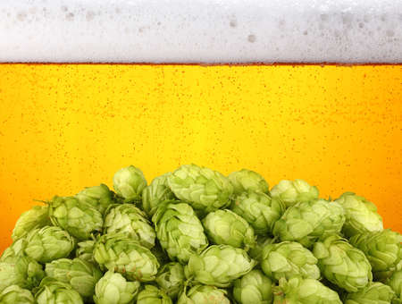 Close up heap of fresh green hops over background of lager beer with bubbles and froth in glass, low angle side view