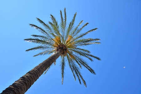 Close up palm tree leaves over clear blue sky with copy space, low angle view