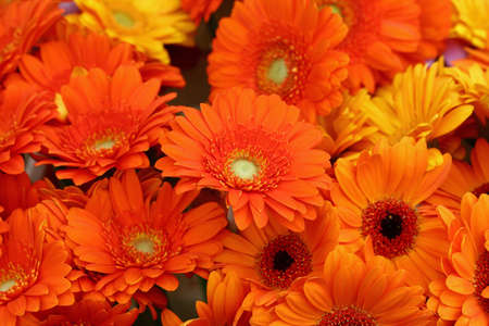 Close up bouquettes of fresh orange color gerber daisy flowers with on retail display, high angle view Imagens