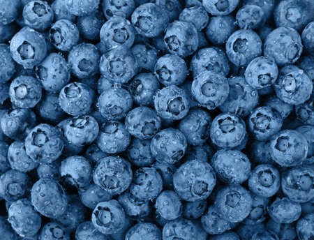 Close up background pattern of blue toned fresh washed wet blueberry berries with water drops, elevated top view, directly above