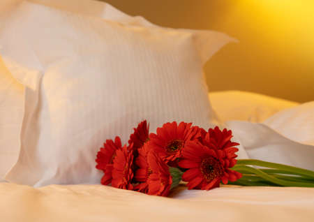 Bouquet of red gerbera daisy flowers on white bed sheets, low angle view
