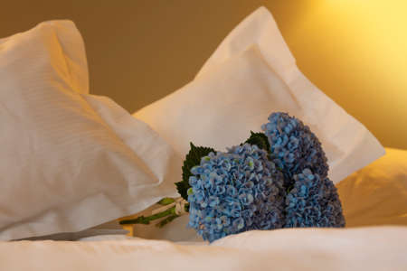 Bouquet of blue hydrangea (hortensia) flowers on white bed sheets, low angle view Stok Fotoğraf