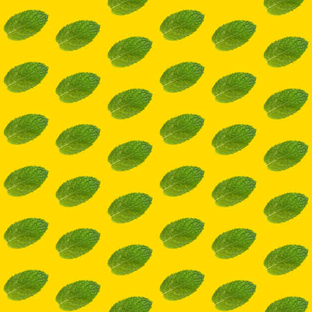 Seamless pattern of fresh green mint leaves on vivid yellow background Stok Fotoğraf