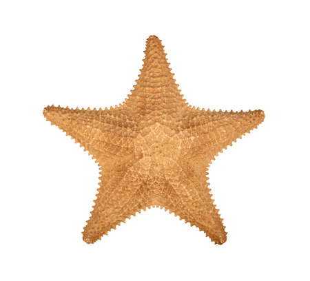 Close up one dried sea starfish (sea star, asteroid or five finger fish) isolated on white background, elevated top view, directly above Stok Fotoğraf