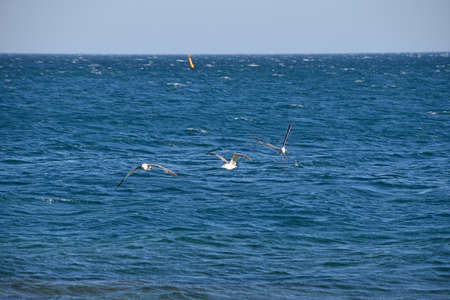 Sea gulls flying and hovering in above blue sea water, low angle view