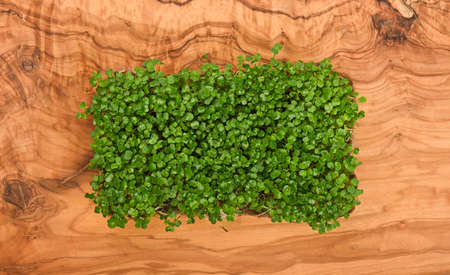 Close up fresh green arugula microgreens sprouts on brown wooden cutting board background, elevated top view, directly above