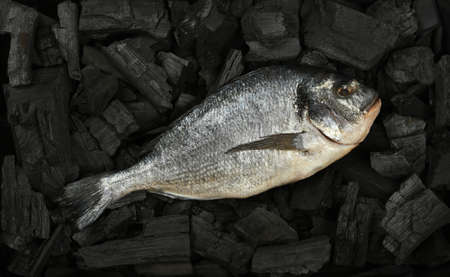 Close up raw Dorada sea bream fish on black lump charcoal pieces ready for barbecue grill cooking, elevated top view, directly above