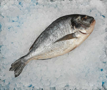 Close up one fresh raw Dorada sea bream fish on background of crushed ice on retail display, elevated top view, directly above