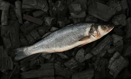 Close up raw European sea bass fish on black lump charcoal pieces ready for barbecue grill cooking, elevated top view, directly above