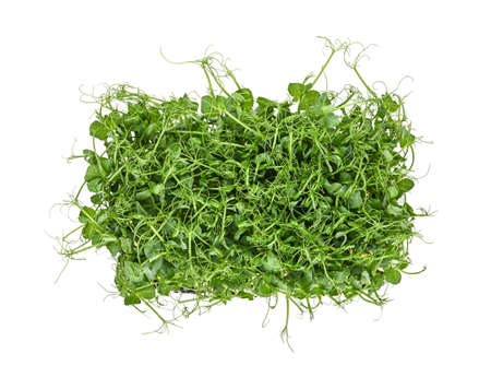 Close up fresh green peas microgreen sprouts isolated on white background, elevated top view, directly above
