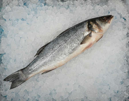 Close up one fresh raw European sea bass fish on background of crushed ice on retail display, elevated top view, directly above