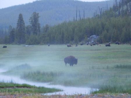 wanderlust: Yellowstone National Park