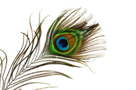 Peacock feather eye Stock Photo