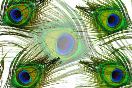 peacock eye: Peacock feather eyes background Stock Photo