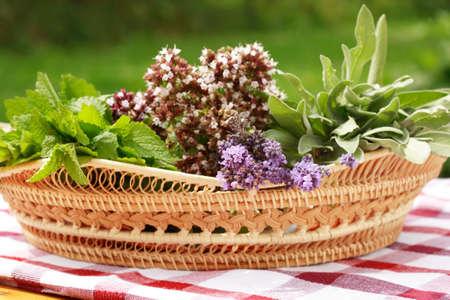 curative: Herbs
