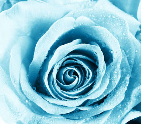 Close-up of abstract blue rose photo