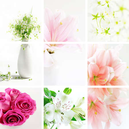 Collage of beautiful flowers in fresh colors Stock Photo