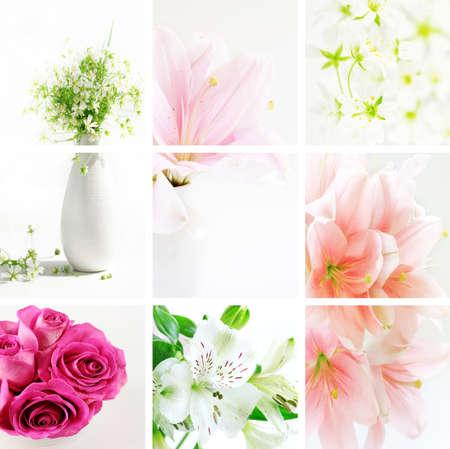 Collage of beautiful flowers in fresh colors Zdjęcie Seryjne