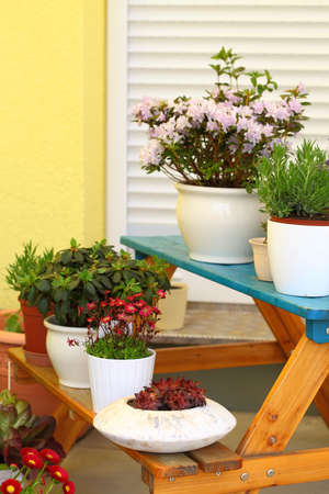 Small herb and flower garden built on terrace or roof Stock Photo - 6965424