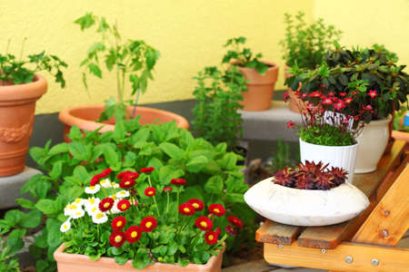 balcony: Small herb and flower garden built on terrace or roof