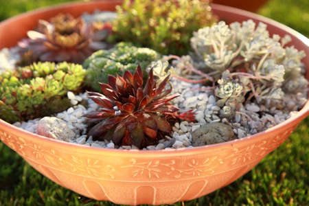 Beautiful rock garden cultivated in small basin or roof gardening photo