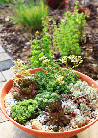cultivated: Beautiful rock garden cultivated in small basin or roof gardening
