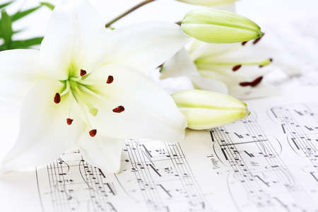 classical music: Music notes with white lily flower Stock Photo