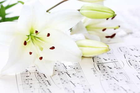 musica clasica: Notas de la m�sica con flor de lirio blanco