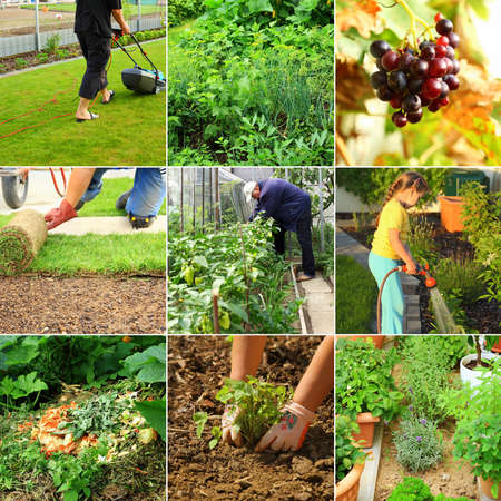 Collection of garden images - composting, cutting grass, watering,  photo