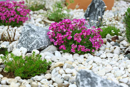 Beautiful rock garden cultivated roof gardening
