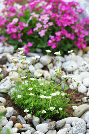 cultivated: Beautiful rock garden cultivated roof gardening