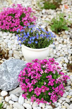 Beautiful rock garden cultivated roof gardening photo