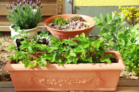Small herb and flower garden built on terrace or roof Stock Photo - 9322735