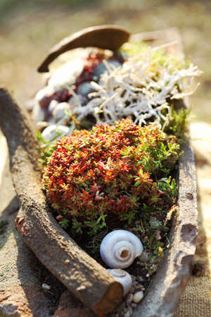 Beautiful Succulents implant in stony pot for balcony gardening photo